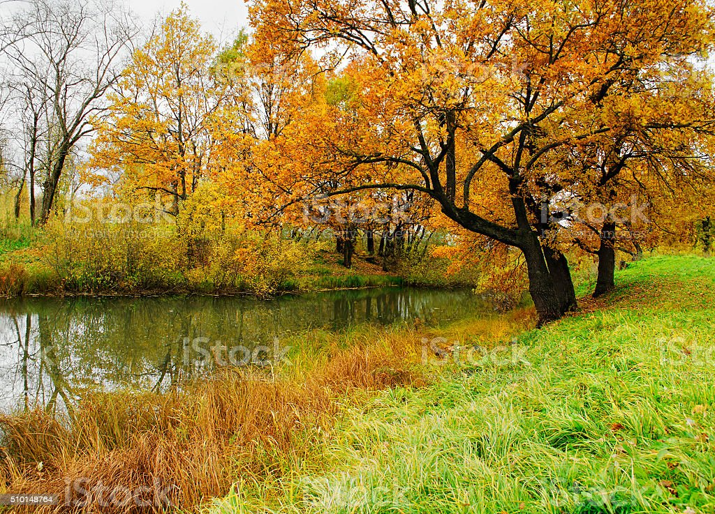 Autumn landscape with oak trees near the pond stock photo