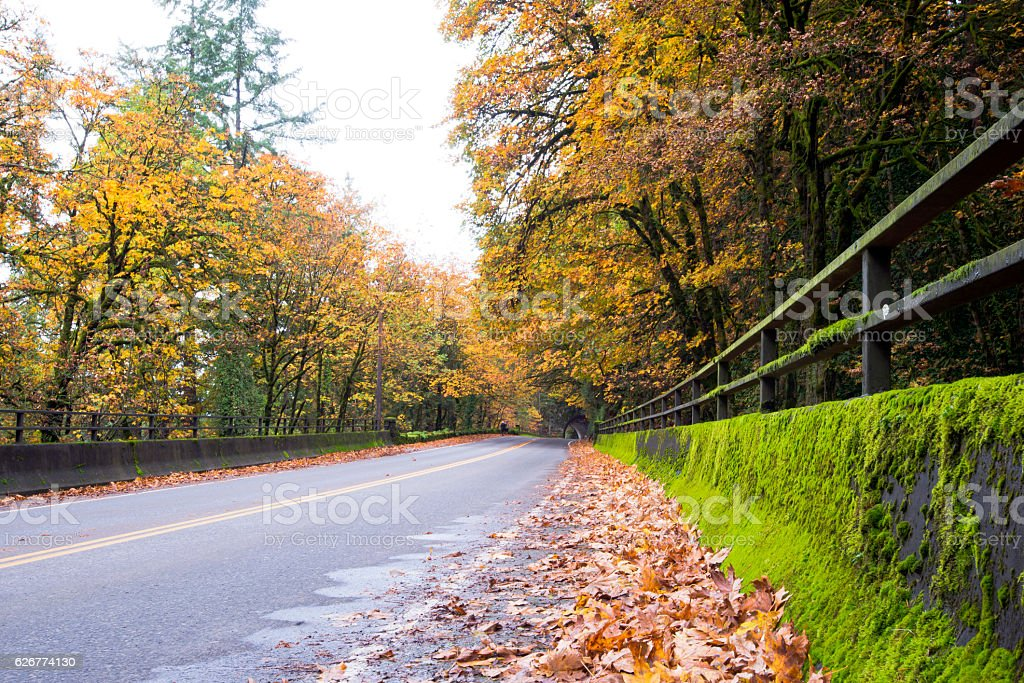 Autumn landscape with road and tunnel in the forest stock photo
