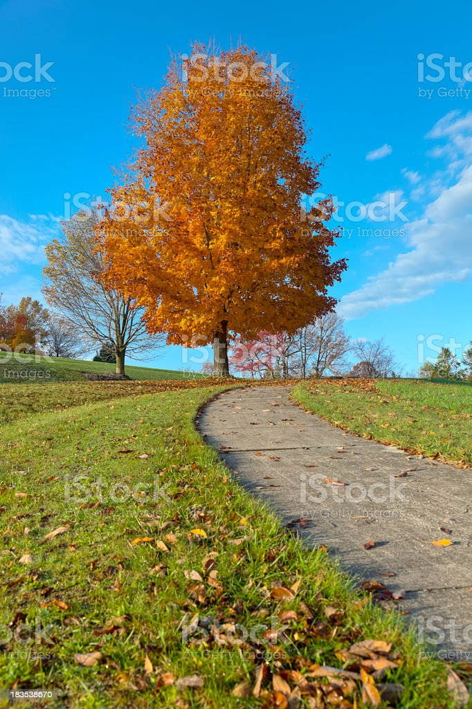 Autumn Landscape with Walkway Leading to the Sky stock photo