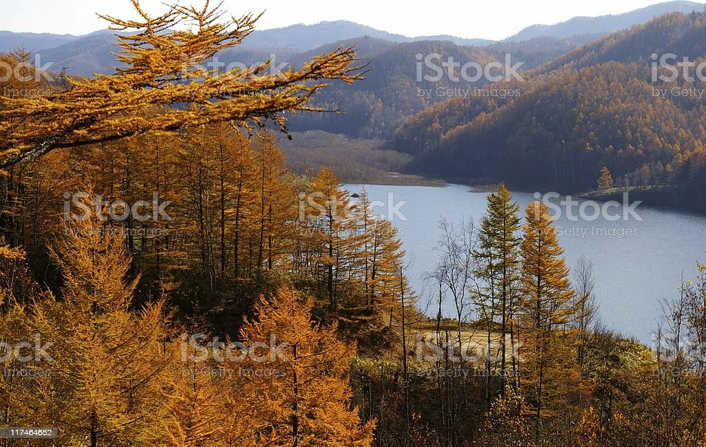 Autumn larches and mountain  lake. stock photo