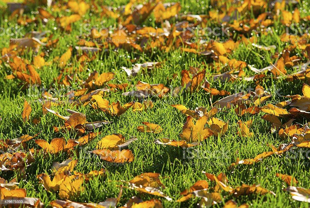 Autumn lawn royalty-free stock photo