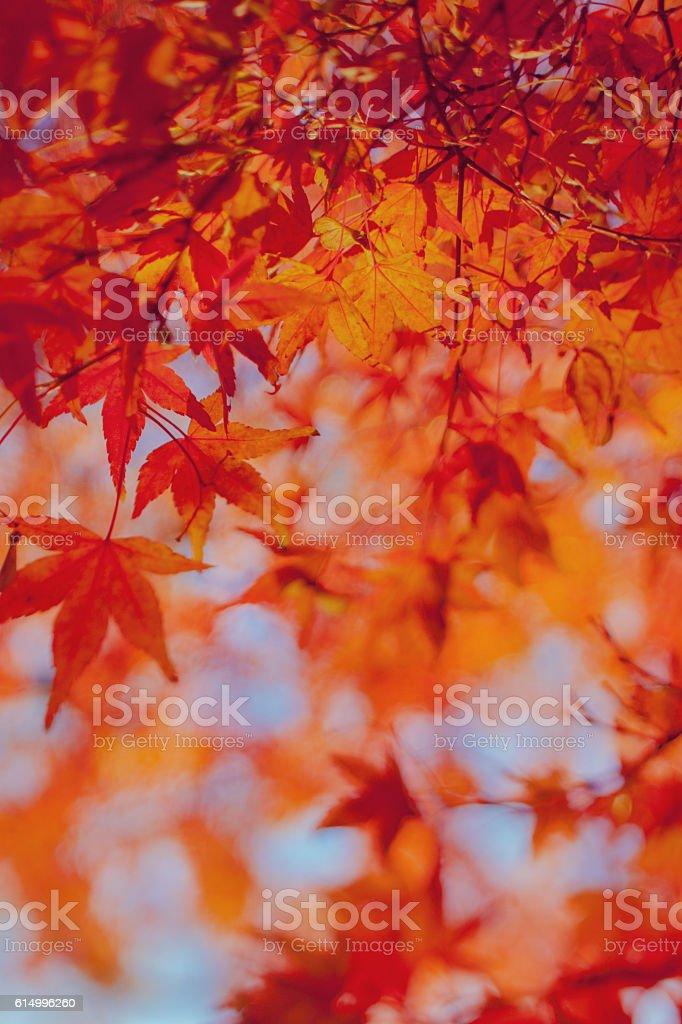 Autumn leaf Background Image stock photo