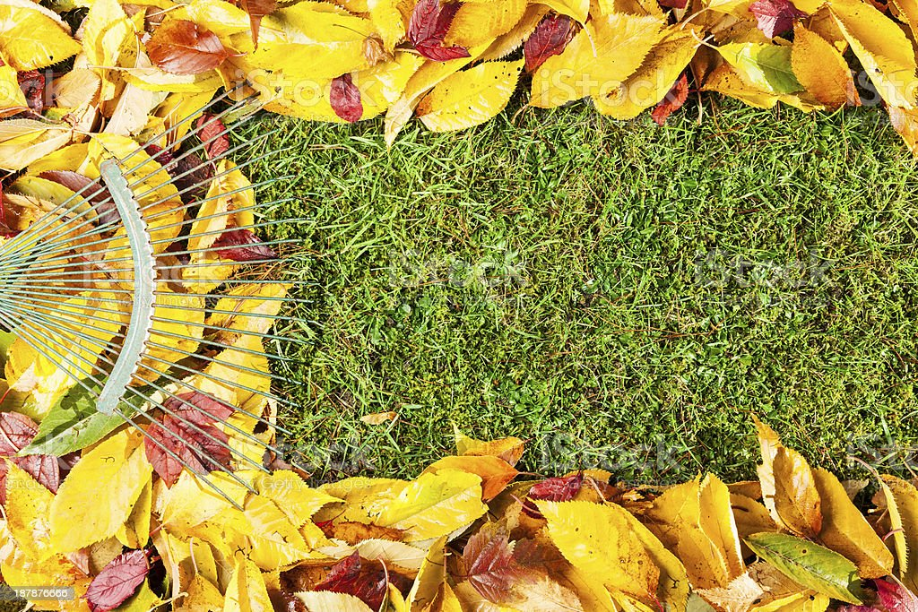 Autumn leaf border frame in grass stock photo