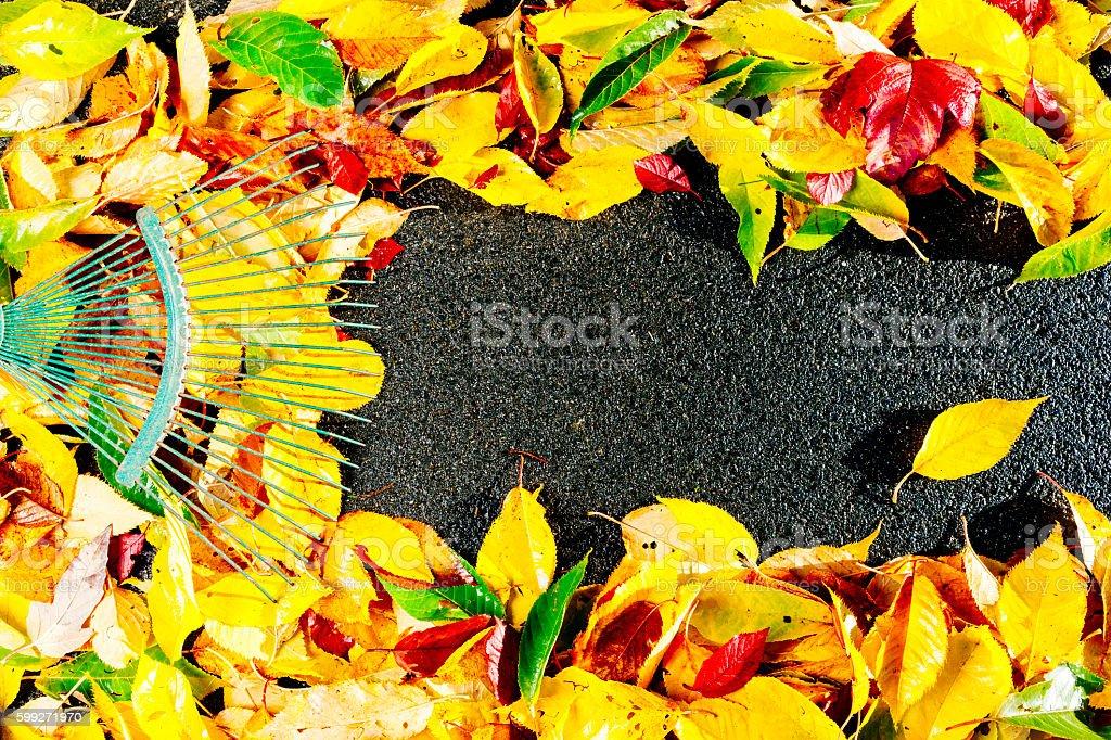 Autumn leaf clearup stock photo