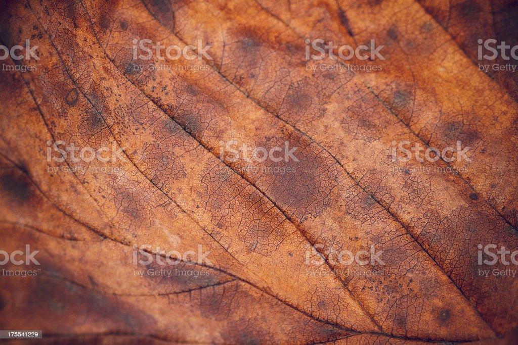 Autumn Leaf Close-Up royalty-free stock photo