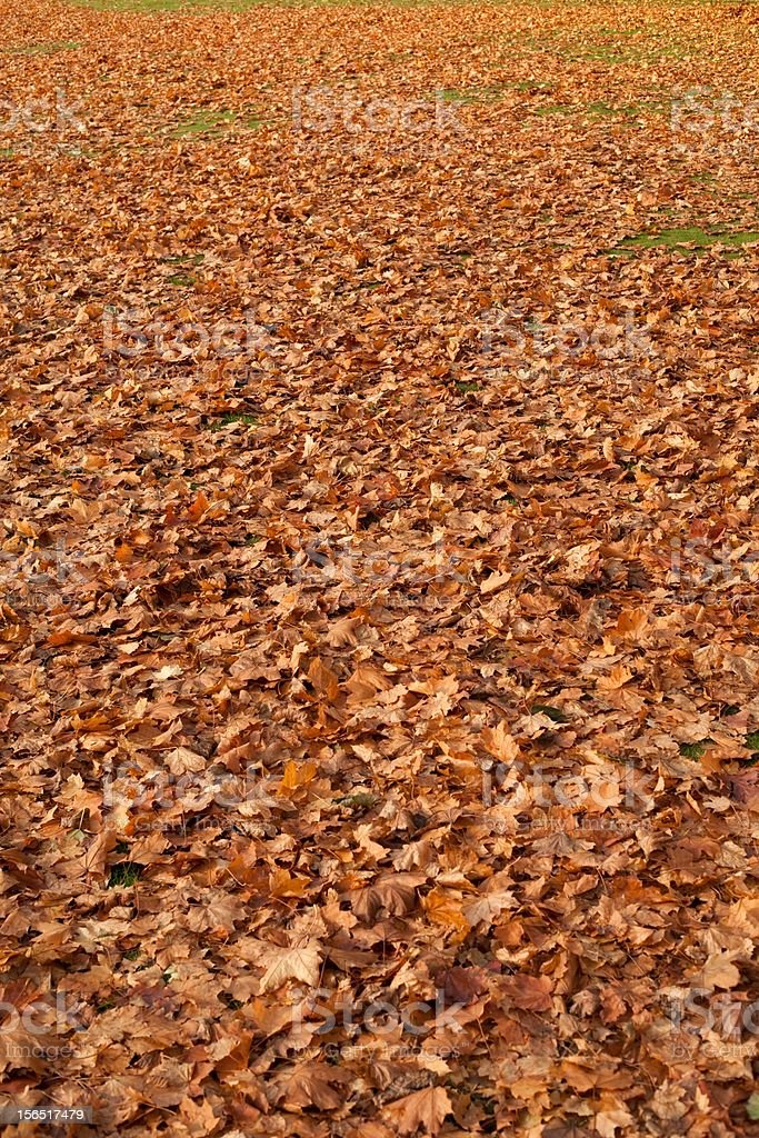 Autumn leaf cover royalty-free stock photo