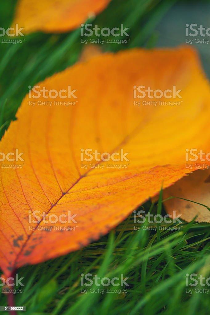 Autumn Leaf Detail stock photo