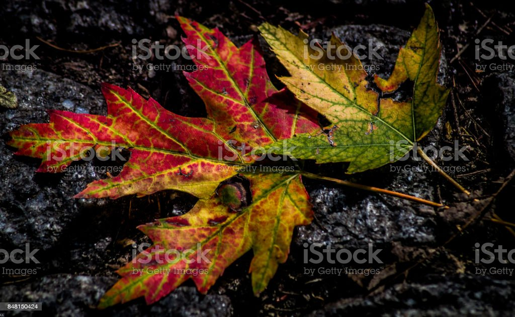 Autumn leaf fall stock photo
