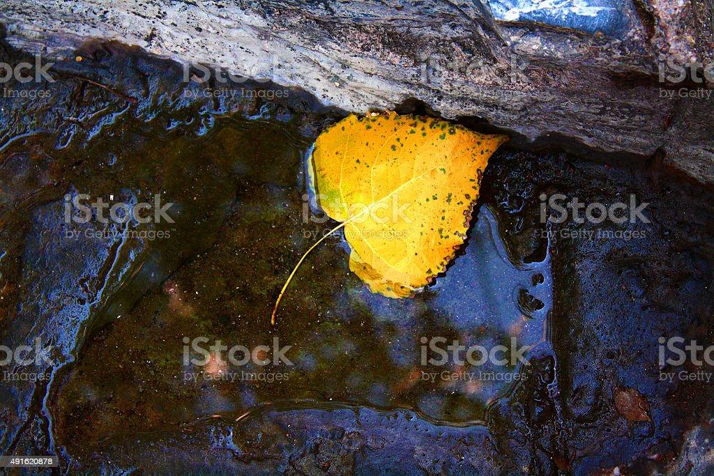autumn leaf fallen stock photo