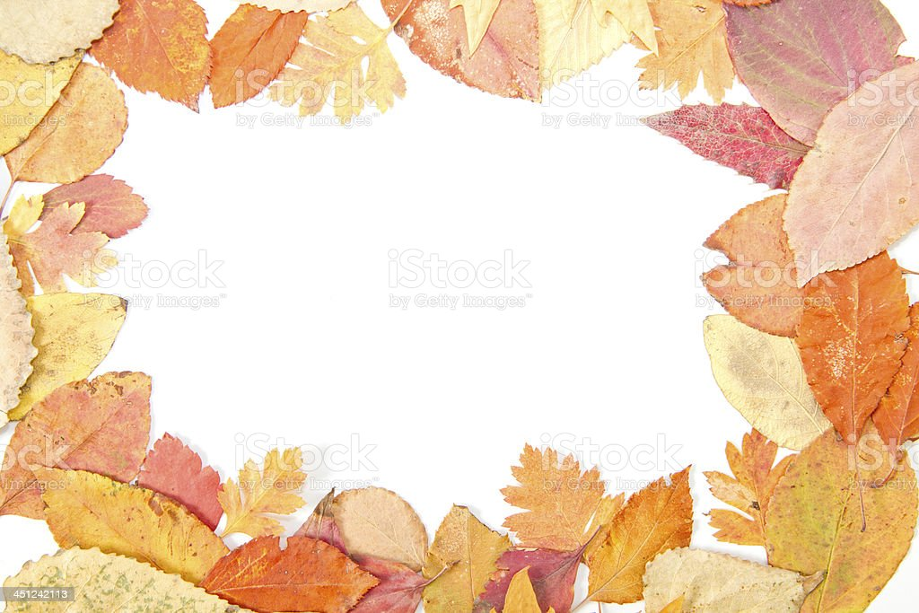 Autumn Leaf Frame (XXL) royalty-free stock photo