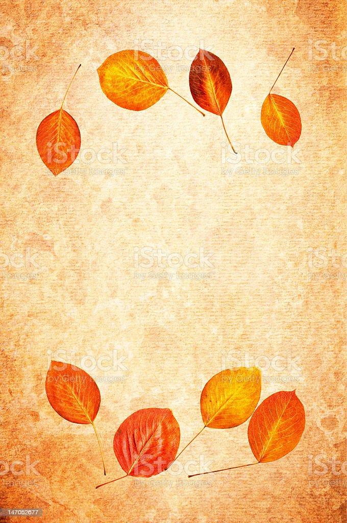 Autumn leaf grunge background royalty-free stock photo