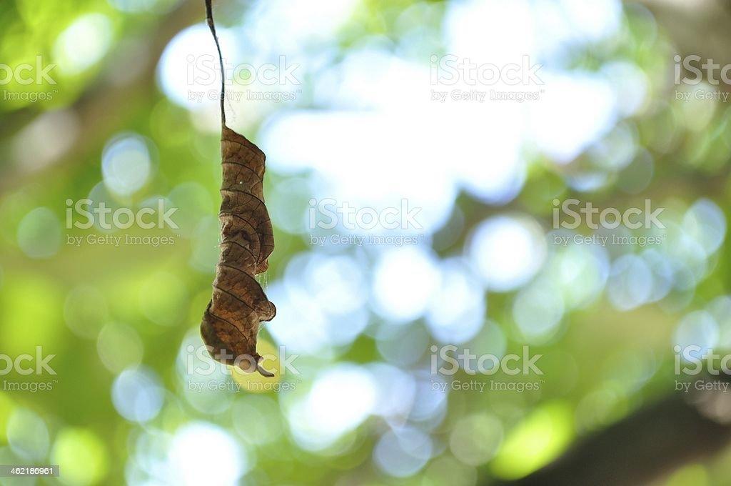 Jesień Liść z drzewa wiszące zbiór zdjęć royalty-free