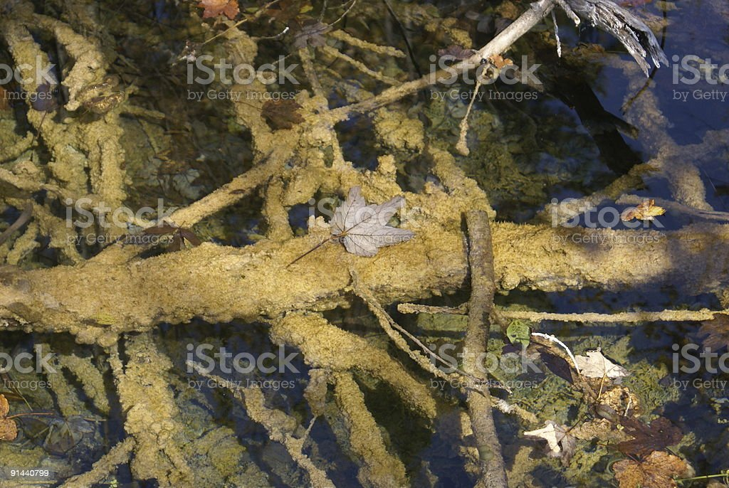 autumn leaf in a placid lake royalty-free stock photo