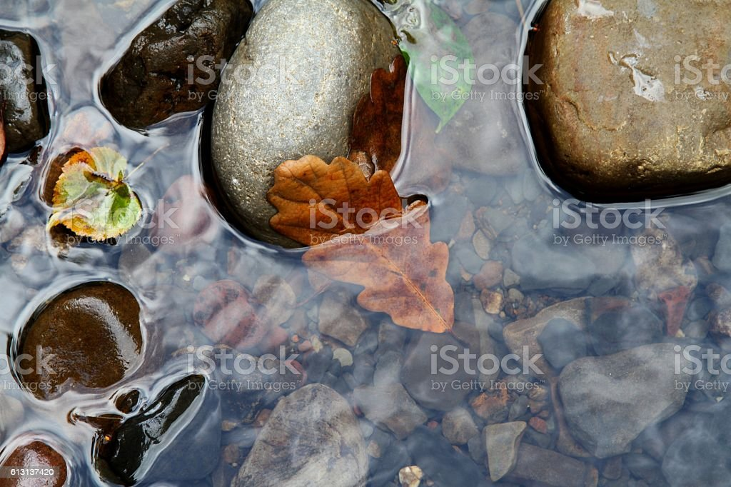 Autumn leaf in river stock photo
