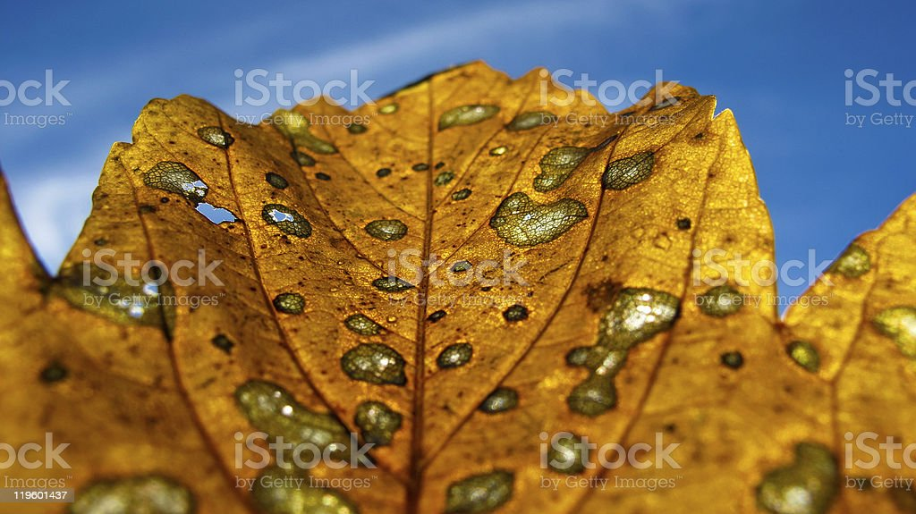 Autumn leaf into the sky royalty-free stock photo