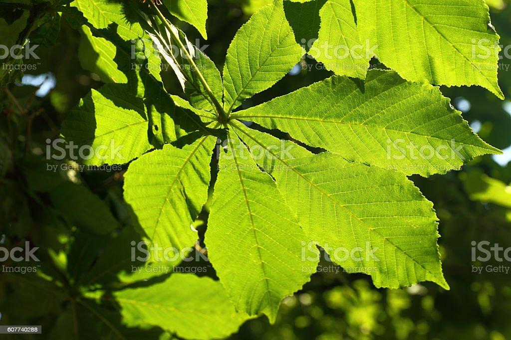 Autumn leaf of an oak stock photo
