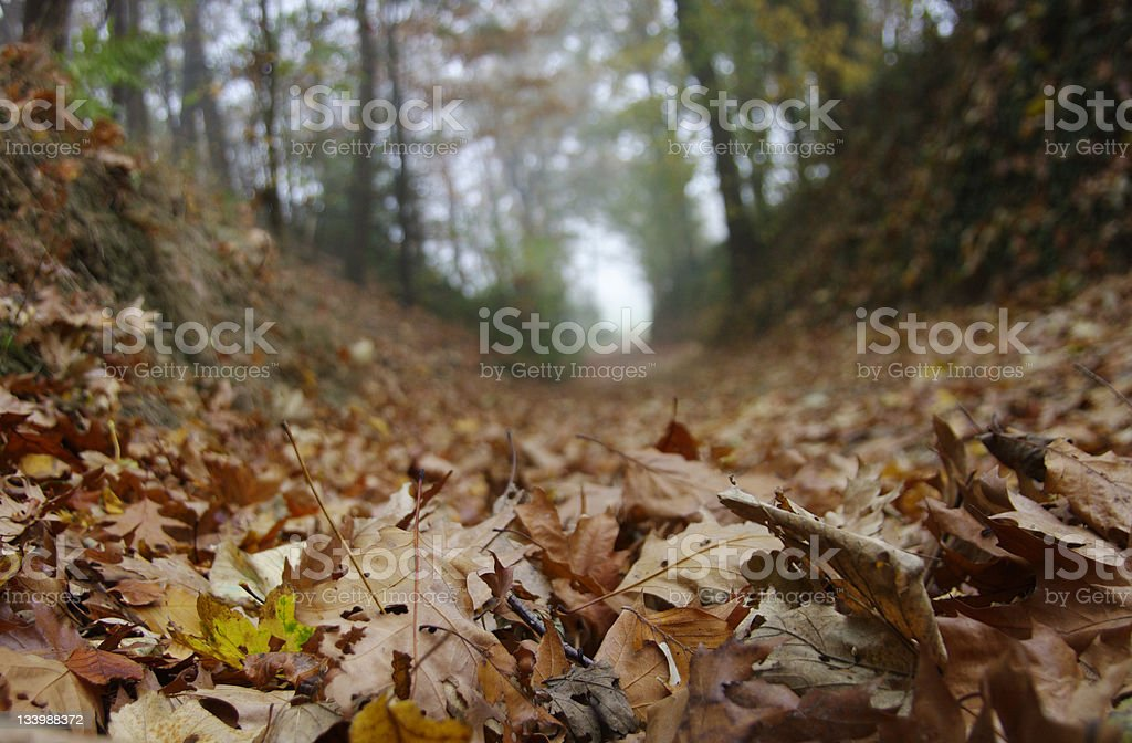 Autumn leaf on a Forest road royalty-free stock photo