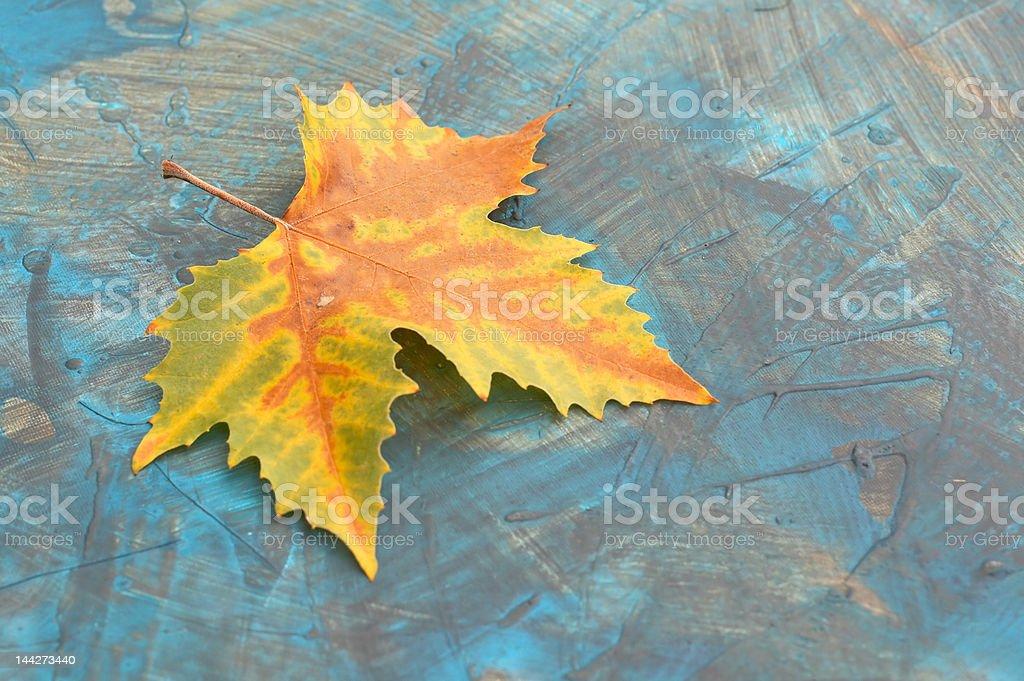 autumn leaf on grunge background royalty-free stock photo