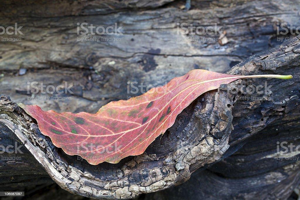 Autumn leaf on log stock photo