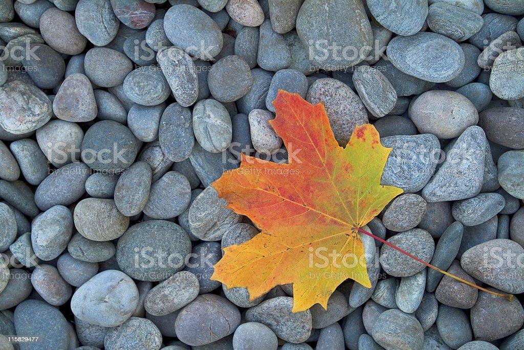 Autumn leaf on pebbles stock photo