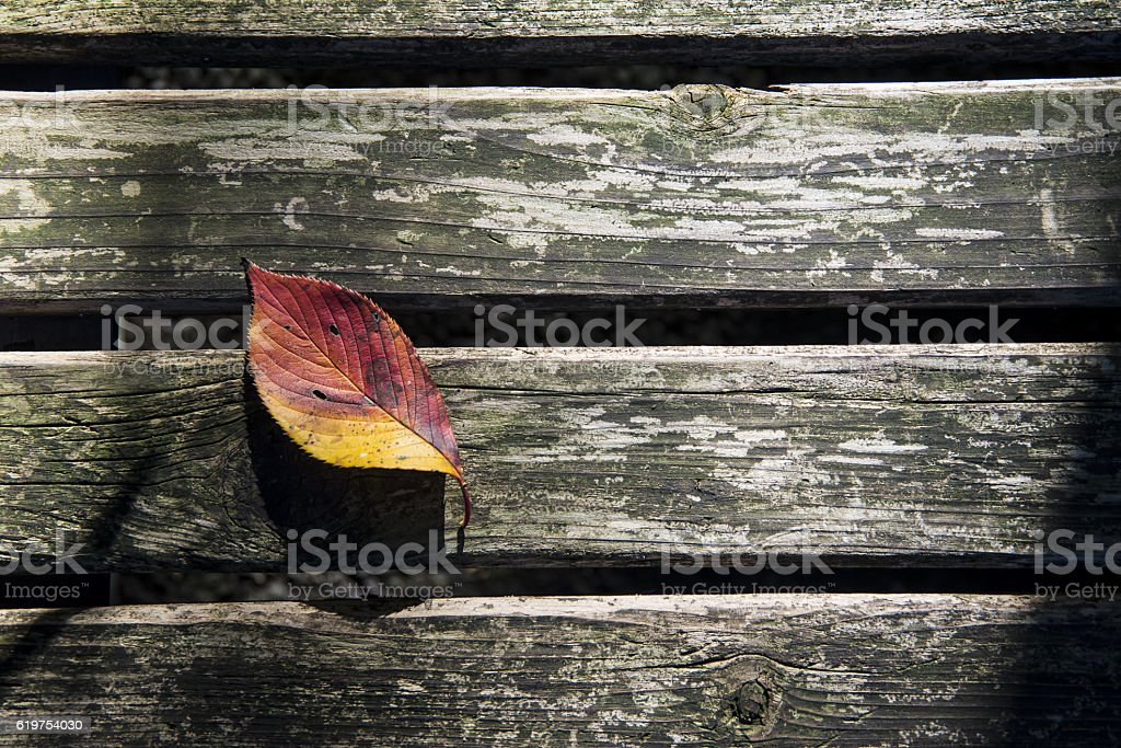 Autumn leaf on the bench stock photo