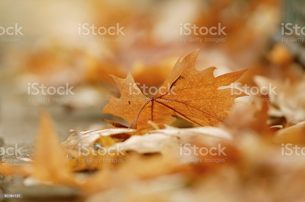Autumn leaf on the ground royalty-free stock photo