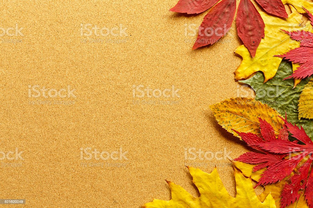 Autumn leaf on wooden background stock photo