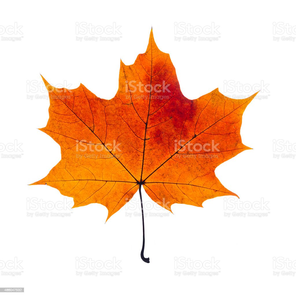autumn leaf stock photo