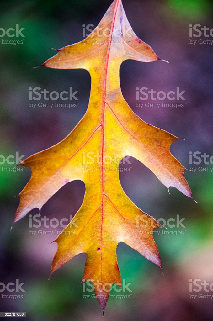 feuille d'automne stock photo