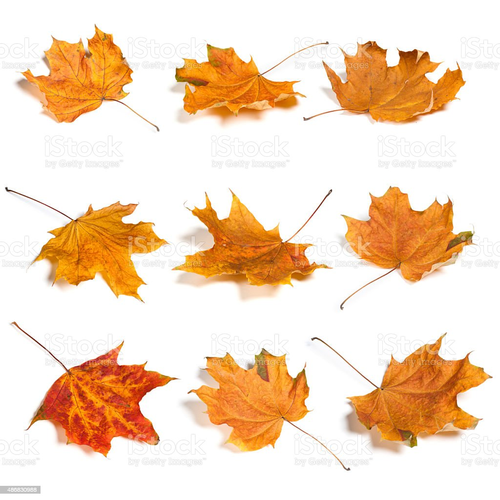 Autumn Leaf Set. stock photo