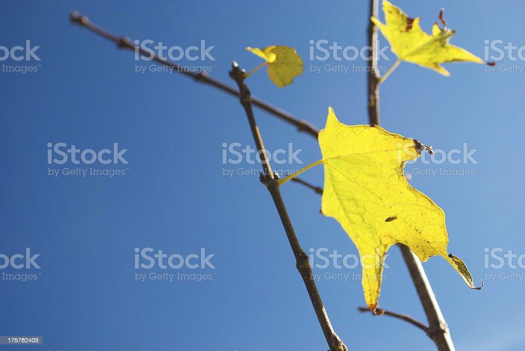 Autumn Leaf & Sky royalty-free stock photo