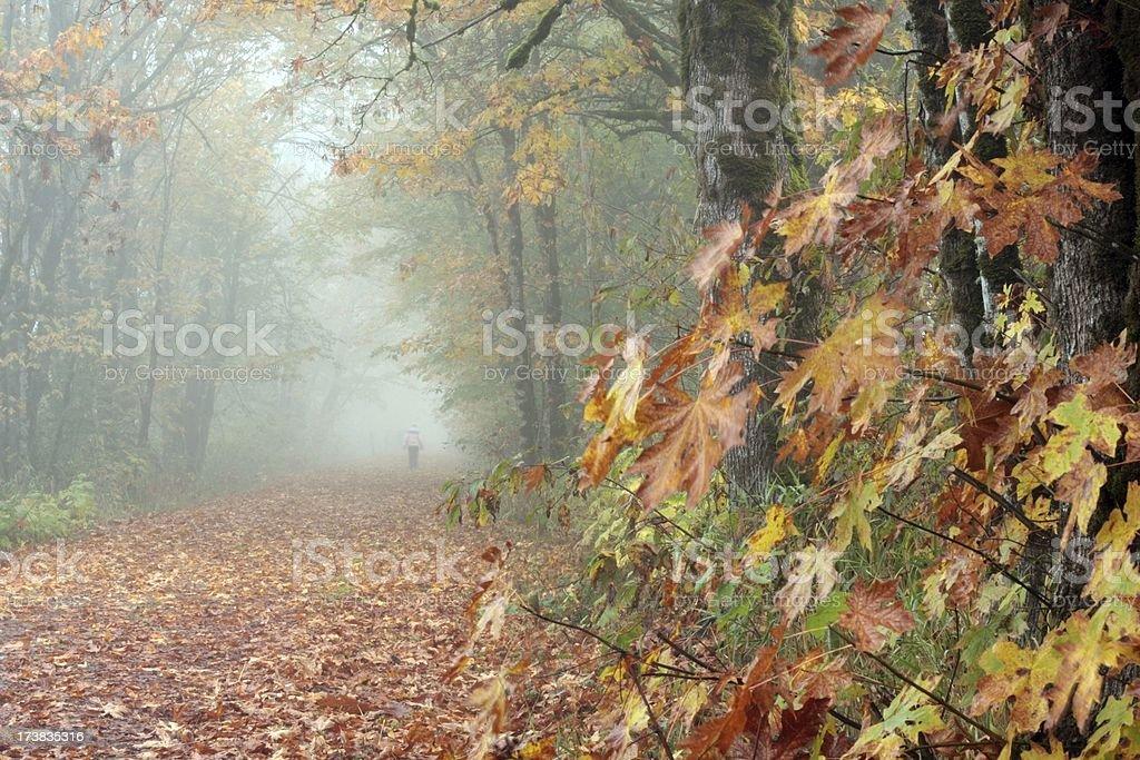 Autumn Leaf Walk royalty-free stock photo