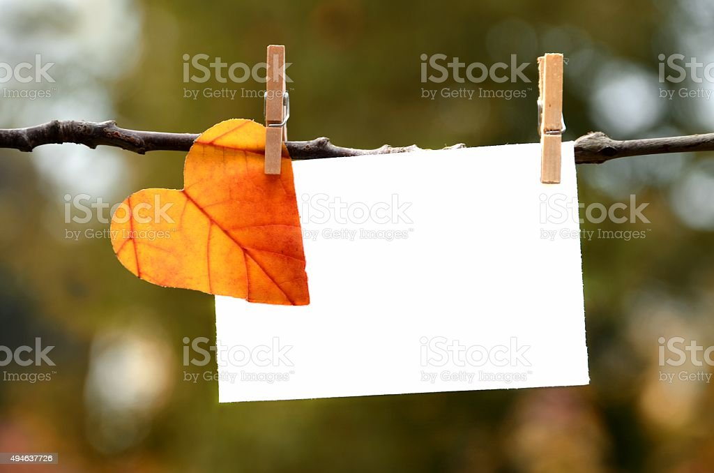 Autumn leaf with card stock photo