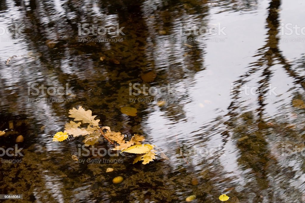 Autumn leafes royalty-free stock photo