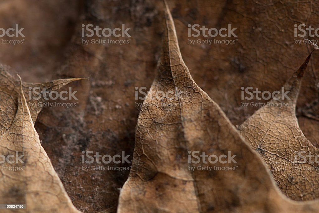 Autumn leafs background stock photo