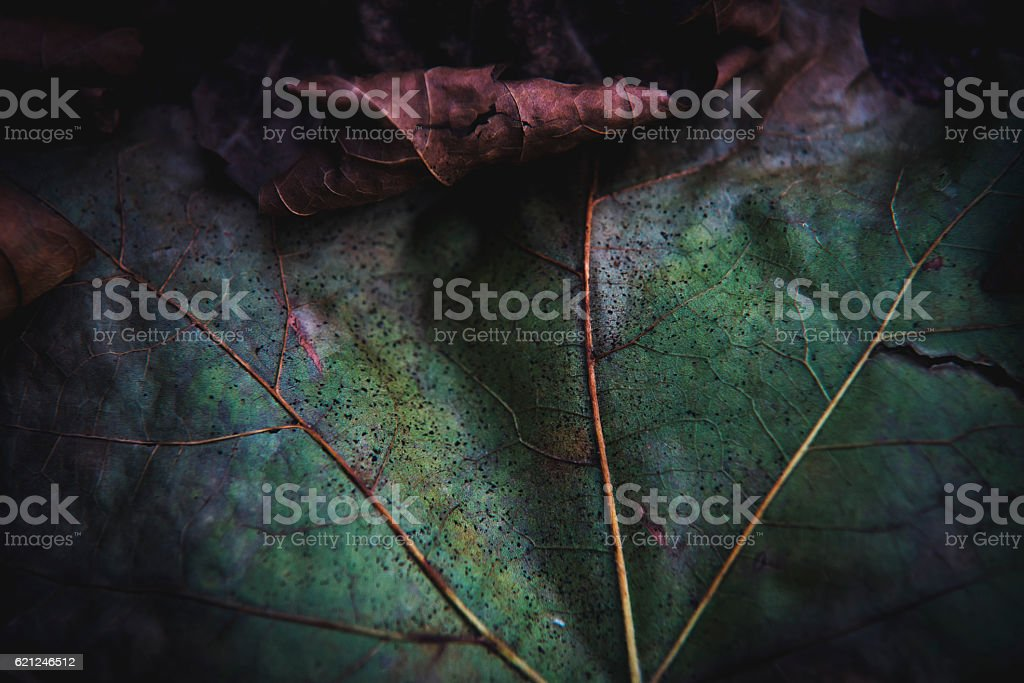 Autumn leafs close up stock photo