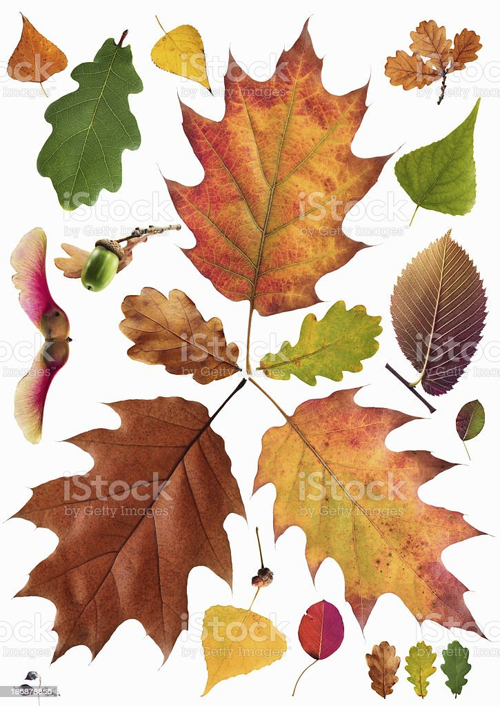 Autumn leafs collection royalty-free stock photo