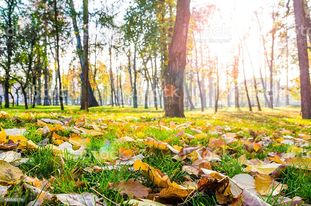 Autumn leafs on green grass in the park with trees stock photo