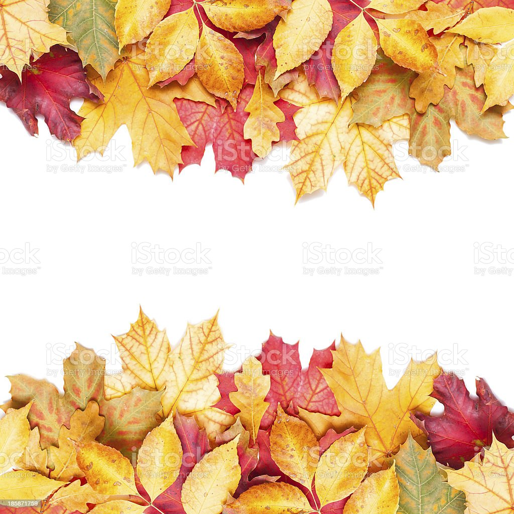 autumn leafs on white background royalty-free stock photo