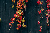 Autumn leafs on wooden background