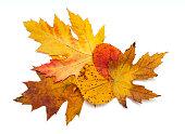 autumn leafs over white