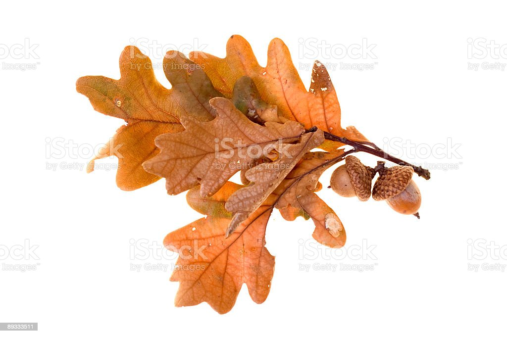 Autumn leafs royalty-free stock photo