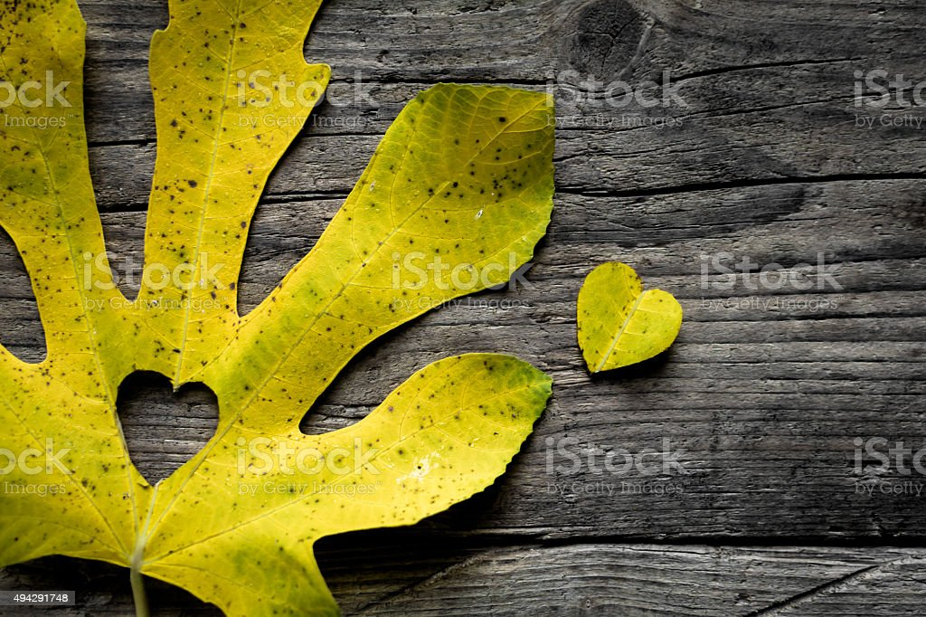 Autumn Leave, Heart Shape, Autumn Background stock photo