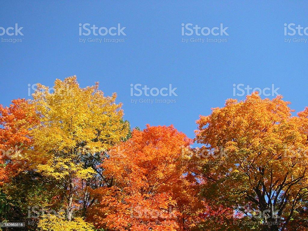 Autumn leaves 02 royalty-free stock photo