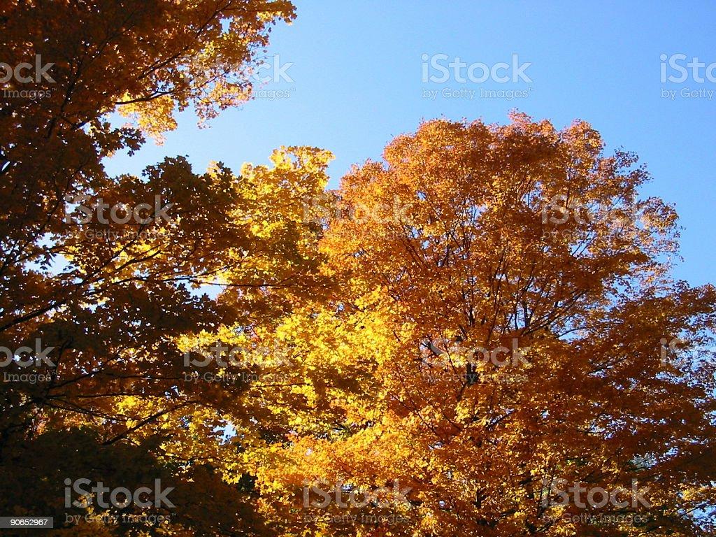 Autumn leaves 03 royalty-free stock photo