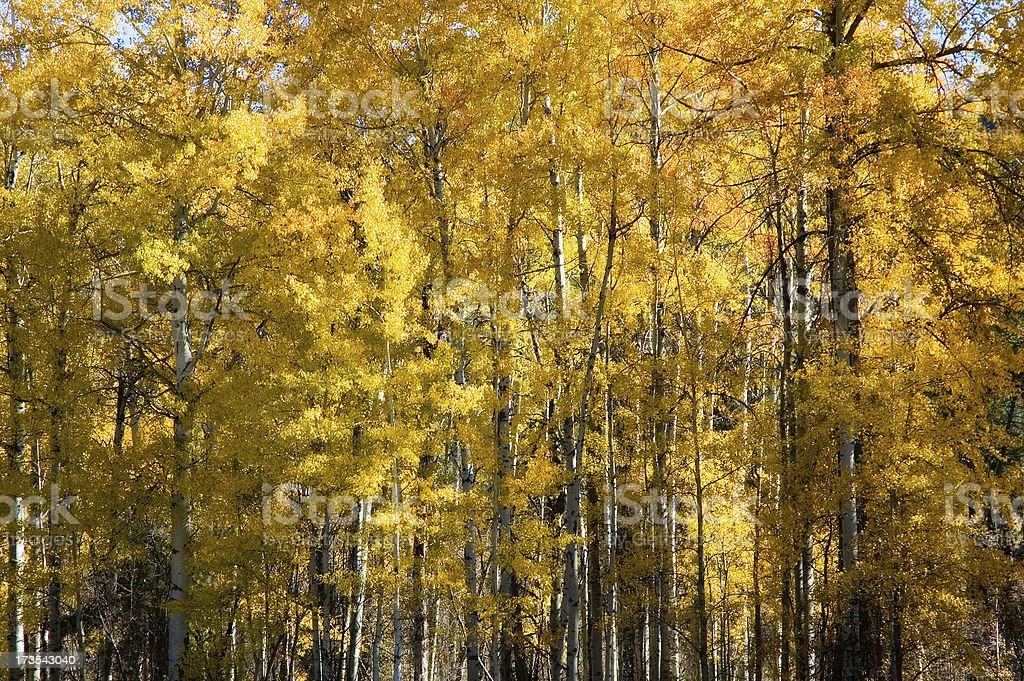 Autumn Leaves 3 royalty-free stock photo