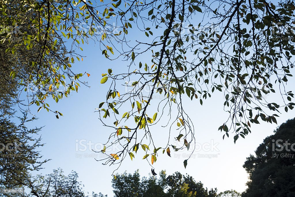 Autumn leaves against the blue sky stock photo