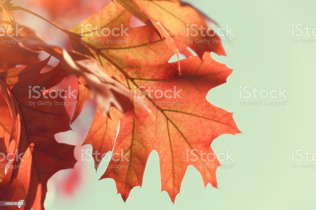 Autumn leaves against  turquoise Sky, vintage style stock photo