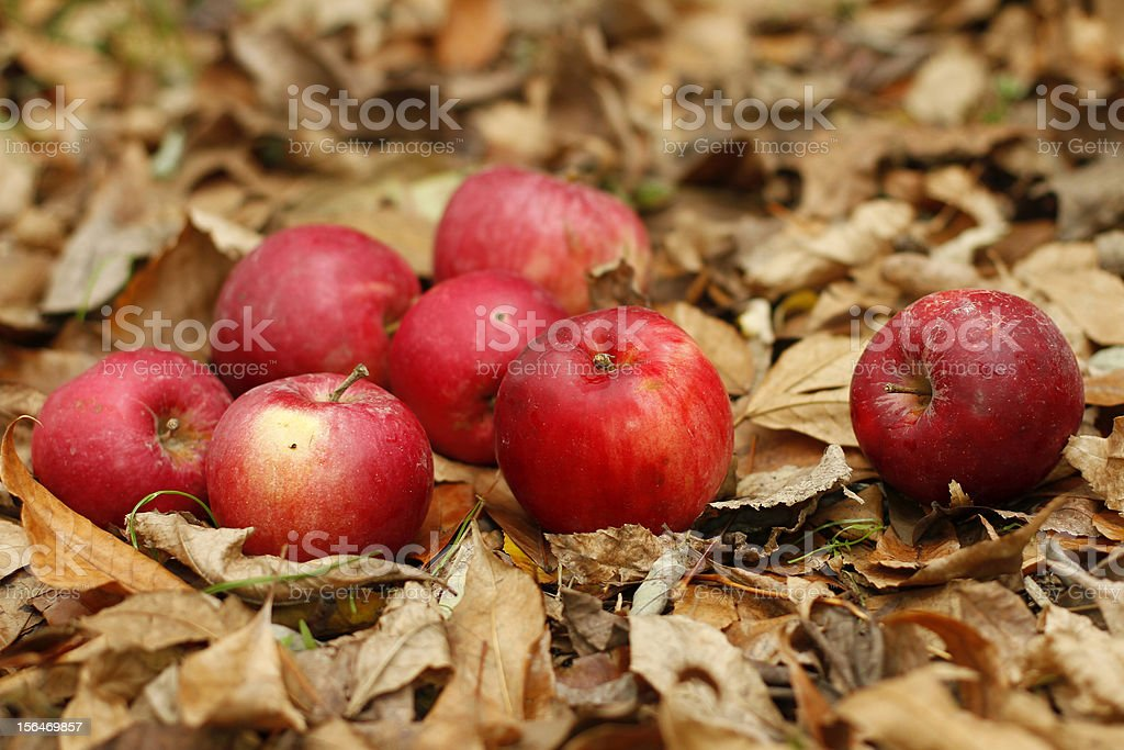 Autumn leaves and apples royalty-free stock photo