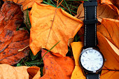 Autumn Leaves and Clock isolated